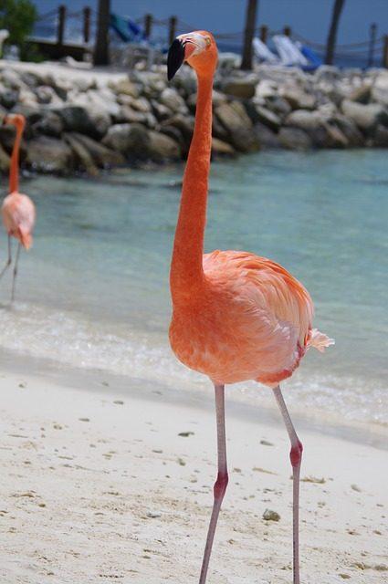 flamingo-641085_640-425x640