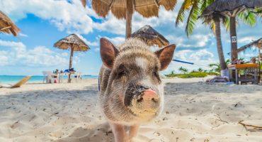 6 rantaa ja uskomattomat eläimet