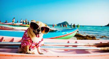 Tarkistusluettelo sinulle ja koirallesi ennen lomalle lähtöä