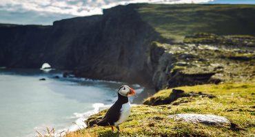Paikallisopas Islantiin: Viisi upeaa käyntikohdetta: