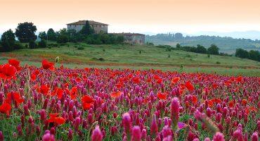 Euroopan kuusi kauneinta puutarhaa, joissa voit ottaa vastaan kukkivan kevään!